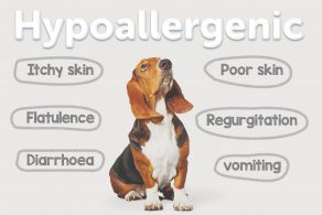 Why feed a Hypoallergenic dog food?